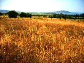 property in Bulgaria, property Bulgaria, bulgarian property, land in Bulgaria, buy bulgarian land, buy bulgarian property, property in Burgas, Burgas property, property Burgas, bulgarian land near Bourgas,