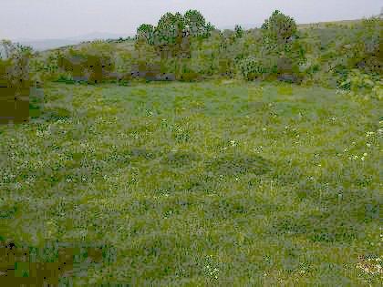 Regulated plot of land near Yambol region